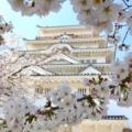 【2020年度版】おススメ厳選37ヶ所!福山市内の桜のおすすめお花見スポット&名所一覧まとめ【福山市桜のお花見情報】